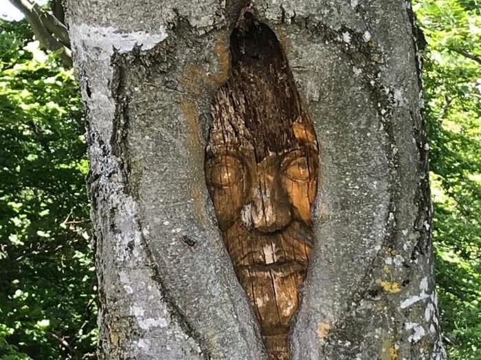 Gesicht im Baum